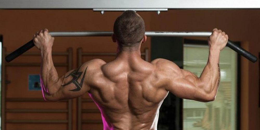 Как работают мышцы